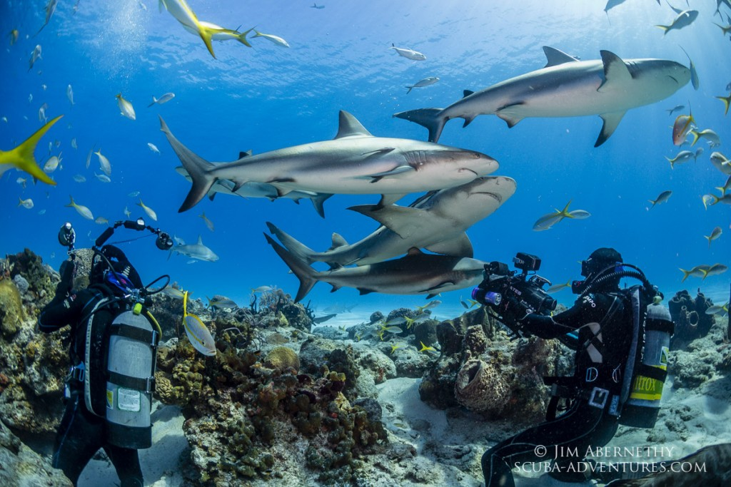 Roger and Jason filming caribbean reef sharks
